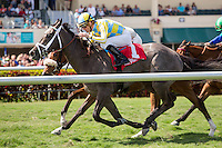 HALLANDALE BEACH, FL - MARCH 04: #1 Dream Dancing with Julien Leparoux up wins the Herecomesthebride (G3T) Stakes at Gulfstream Park. (Photo by Arron Haggart/Eclipse Sportswire/Getty Images)