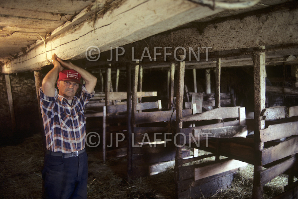 Ile D'Orleans, Quebec City Area, Canada, June 8, 1984. A farmer inside the barns while livestock is pasturing  outside.