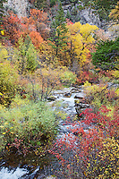 Autumn at Palisades Creek in Swan Valley Idaho