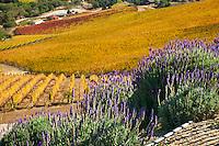 Daou Winery