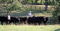 Cowboys in Albemarle County, VA.