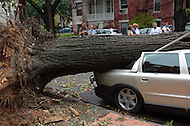 August 28, 2011 (Washington, DC) The power of Hurricane Irene was evident in the 100 block of 5th St NE, where this tree was uprooted by strong winds and saturated soil. The car was destroyed.  (Photo by Don Baxter/Media Images International)