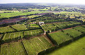An aerial view of a citrus orchard near Pukenui, Houhora, Far North. Northland, New Zealand.