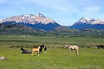 Horses in Tres Valles, Argentina