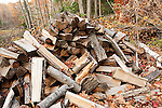 Winter firewood pile in forest