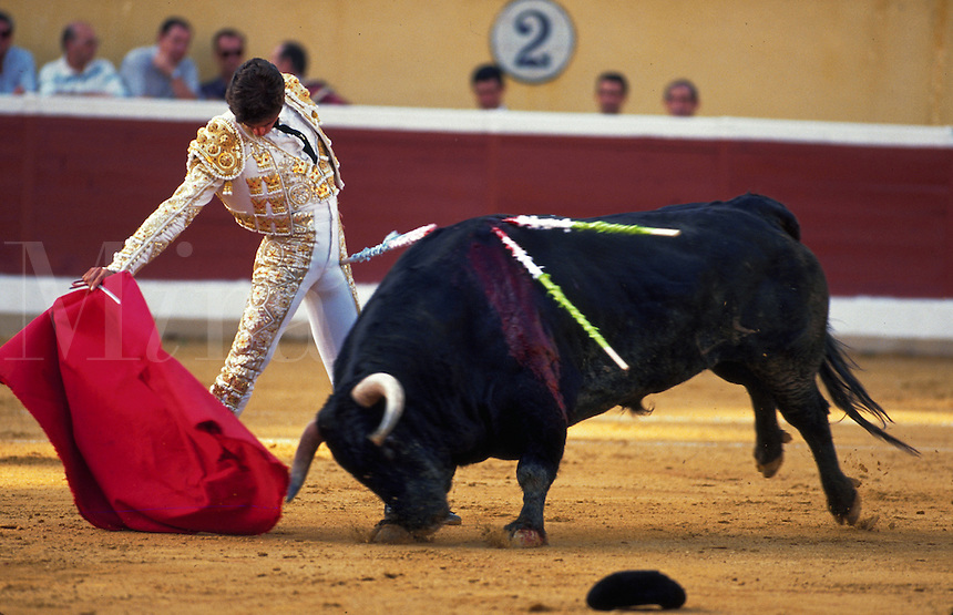 A Spanish bullfighter in traditional attire goes through his paces with a bull that has been speared several times. Spain..