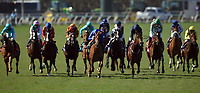 DEL MAR, CA - NOVEMBER 04: The pack heads up the track during the Breeders' Cup Filly and Mare Turf race on Day 2 of the 2017 Breeders' Cup World Championships at Del Mar Racing Club on November 4, 2017 in Del Mar, California. (Photo by John Durr/Eclipse Sportswire/Breeders Cup)