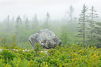 Fog along the walking trail through the forest to the seashore<br /> Seaside Adjunct of Kejimkujik National PArk<br /> Nova Scotia<br /> Canada