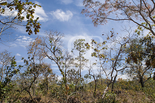 Mato Grosso, Brazil. Cerrado forest.