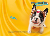 Isabella, CUTE ANIMALS, LUSTIGE TIERE, ANIMALITOS DIVERTIDOS, humor, paintings+++++,ITKE066005-GSB,#ac# funny animals