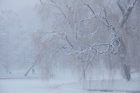 Public Garden snow, Boston, MA