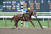 Senor Fuego wins the first race at Saratoga on Aug. 26, 2009 for trainer todd pletcher and jockey ramon dominguez.
