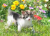 Marek, ANIMALS, REALISTISCHE TIERE, ANIMALES REALISTICOS, cats, photos+++++,PLMP2313,#a#
