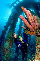 A female diver lights a large branching tube sponge, Pseudoceratina crassa, growing on one of the legs of the Salt Pier, Bonaire, Netherlands Antilles, Caribbean Sea, Atlantic Ocean, MR