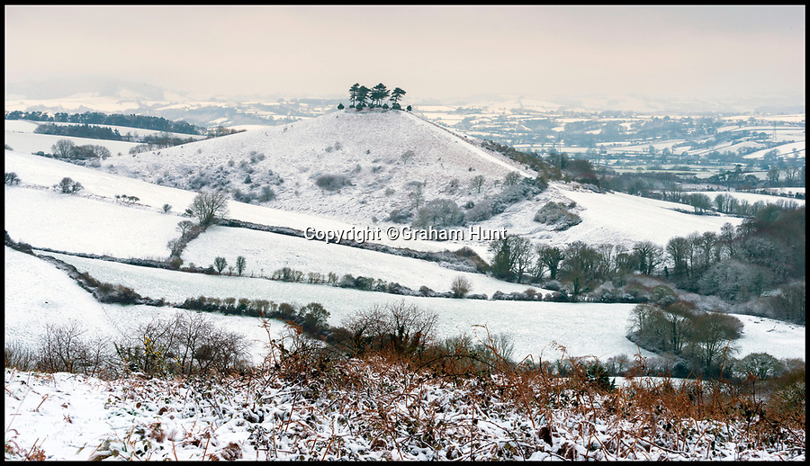 BNPS.co.uk (01202 558833)<br /> Pic: Graham Hunt/BNPS<br /> <br /> A wintery view of Colmers Hill near Bridport in Dorset after heavy overnight snow covers southern Britain.