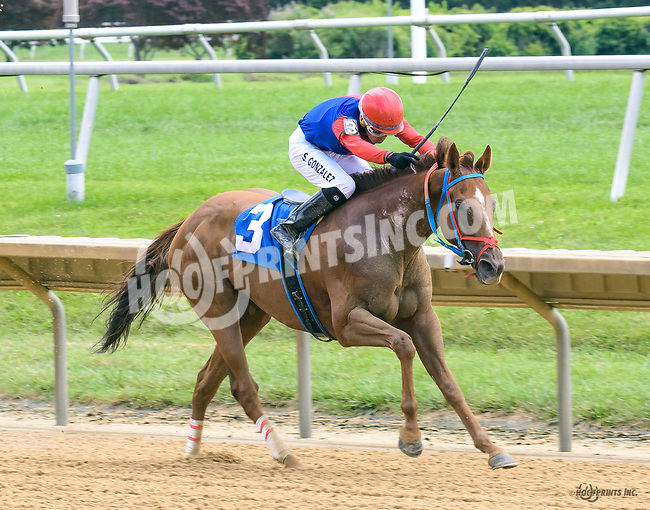 Abets Abet winning at Delaware Park on 7/26/17