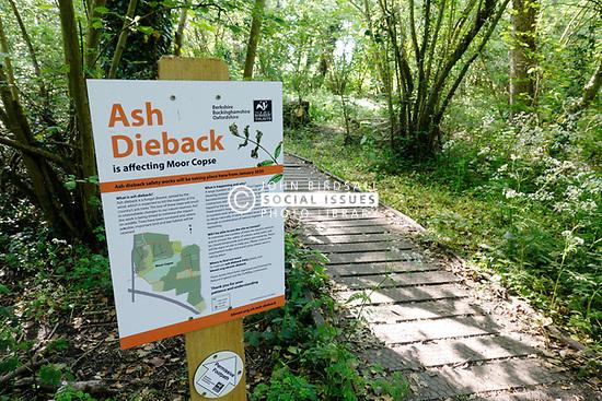 Ash dieback warning sign in Moor Copse woodland, Tidmarsh, Berkshire UK May 2020