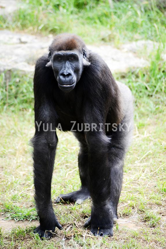 Safari Animals Life