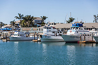 Dana Point Harbor Sport Fishing Boats Docked