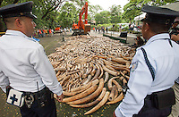 Two policemen look on as five tonnes of confiscated ivory from the Philippines stockpile since 2009 is destroyed by excavator at the Philippines Government Protected Areas and Wildlife Bureau of the Department of Environment and Natural Resources, Quezon City, Manila, Philippines, 21 June 2013.