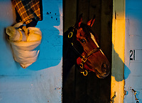 LOUISVILLE, KENTUCKY - APRIL 30: A horse peaks out of his stall on the backside during Kentucky Derby and Oaks preparations at Churchill Downs on April 30, 2017 in Louisville, Kentucky. (Photo by Scott Serio/Eclipse Sportswire/Getty Images)
