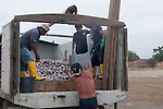 In Puerto Lopez Ecuador men carry the fish from a little fishing boat to a truck for further transport