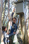 Checking Leadbeater's Possum Nest Boxes