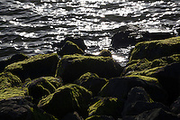 Rocks covered in soft, green velvet - moss, and bordering the rippling waters of San Francisco Bay.