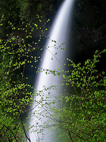 Middle North Falls in spring, Silver Falls State Park, Oregon