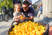 Girl plays with a few of the thousand rubber ducks that wait before their race during a charity event of the Rotary Club in Szentendre (about 20 km North of the capital city Budapest), Hungary on August 31, 2013. ATTILA VOLGYI