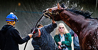 LOUISVILLE, KENTUCKY - MAY 03: Battle of Midway, owned by Fox Hill Farms, Inc. and trained by Jerry Hollendorfer, gets a bath after exercising in preparation for the Kentucky Derby at Churchill Downs on May 3, 2017 in Louisville, Kentucky. (Photo by Scott Serio/Eclipse Sportswire/Getty Images)