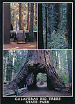 FB 180  Calaveras Big Tree State Park, 5x7 postcard
