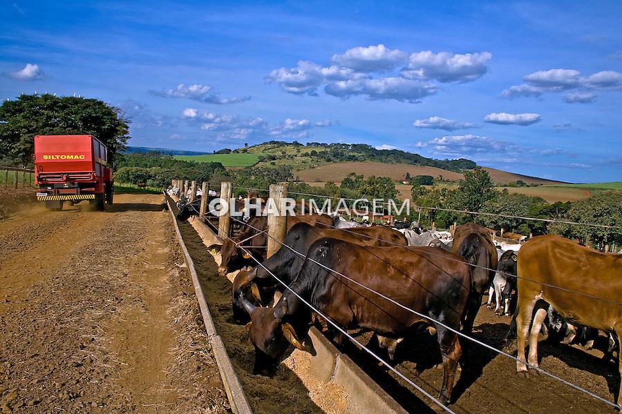 Confinamento de gado de corte na Fazenda Santa Inacia. Cravinhos. Sao Paulo. 2008. Foto de Alf Ribeiro.
