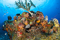 Lobster on the reef<br />