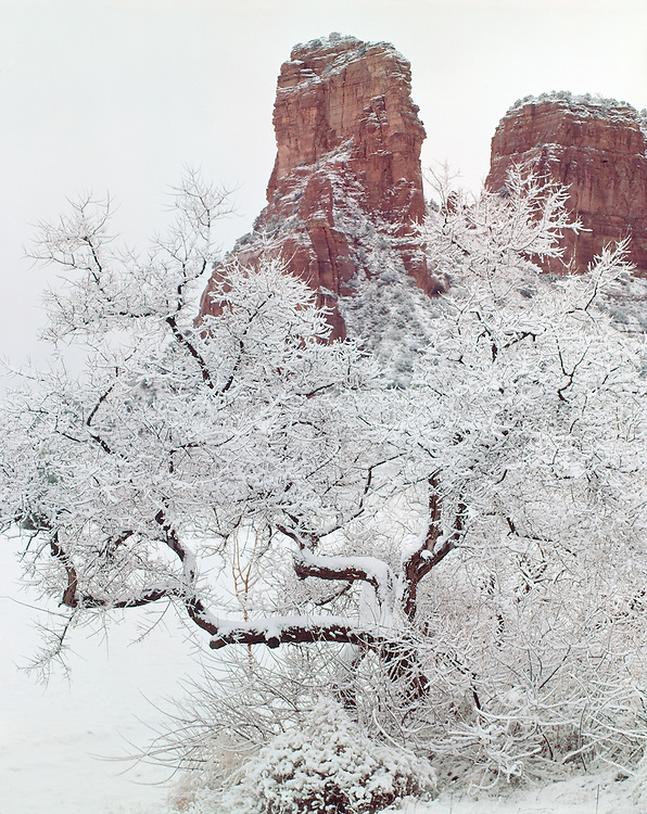 """Winter, Oak Creek Canyon   ARIZONA"""