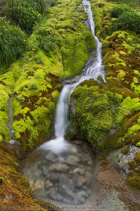 Lush green moss and vegetation surround a cascading stream on UnAlaska Island, Dutch Harbor, Alaska.