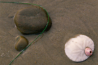 Eccentric sand dollar and barnacle<br />
