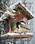 Dona Gelsinger, CHRISTMAS SYMBOLS, paintings+++++,USGE1407,#xx# Symbole, Weihnachten, símbolos, Navidad, illustrations, pinturas