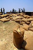 Kapatu, Zambia. Sacks of maize awaiting collection by Government trading organisation.
