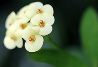 Gorgeous tiny pale yellow flowers coming out of dark close up macro- Free nature stock image.