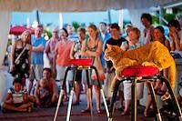 'Cats' sunset performance at Mallory Square, Key West, Florida, USA. Photo by Debi Pittman Wilkey