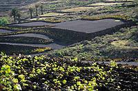 Europe/Espagne/Iles Canaries/Lanzarote : Paysage volcanique de la Geria - Vignes