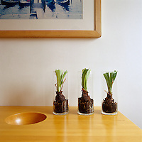 Three hyacinth bulbs in glass vases on a side table in the dining room