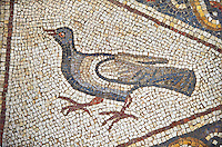 A bird from the 3rd century Roman mosaic villa floor from Lod, near Tel Aviv, Israel. The Roman floor mosaic of Lod is the largest and best preserved mosaic floor from the levant region along the eastern Mediterranean coast. It is unclear whether the owners were Jewish, Christian or pagan but either way they would have been wealthy to own such a magnificent floor. The Shelby White and Leon Levy Lod Mosaic Centre, Lod, Israel.