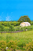 Blue sky, homestead house by itself in isolated acres, meadow field, fruit trees orchard, fenced garden