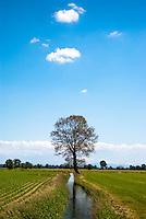 Un albero in un campo nell'Abbiatense presso Gudo Visconti nel Parco agricolo Sud Milano --- A tree in a field near Gudo Visconti in the Rural Park South Milan