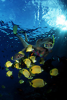 A woman (MR) snorkeling with milletseed butterflyfish (endemic) Chaetodon miliaris, and miscellaneous reef fish. Hawaii.