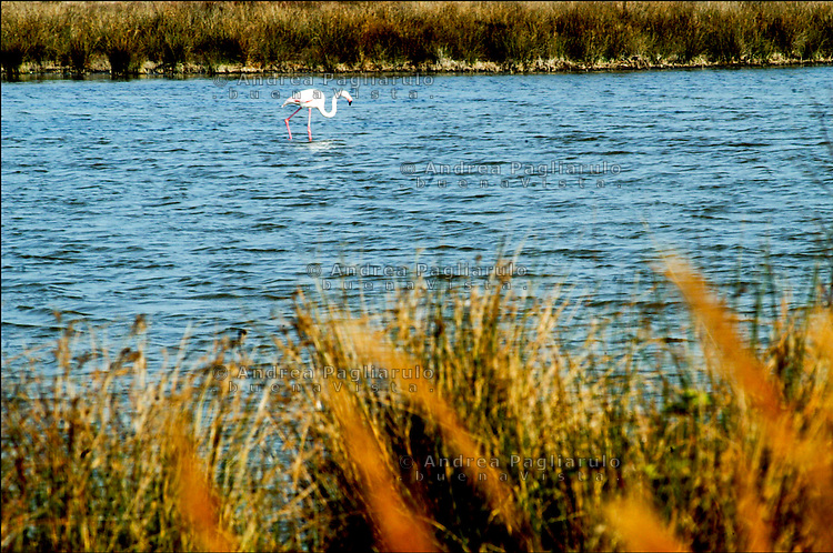 Camargue, Le Grau do Roi