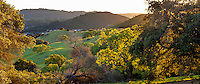 California Coastal Range with Oak trees (Quercus lobata and Q. agrifolia) and rolling hills on Mt. Burdell State Park, Novato, California