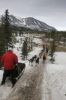 Vern Halter runs down a barren trail near Egypt mountain shortly after leaving the Rohn checkpoint 2005 Iditarod Trail Sled Dog Race.